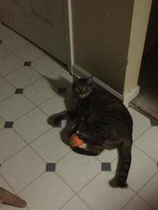 Jill with ball