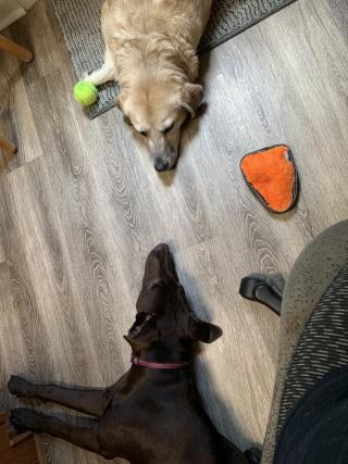 Chloe and Layla standoff
